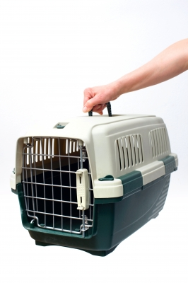 Moving Abroad: Taking Your Pets Part IIa – Flying